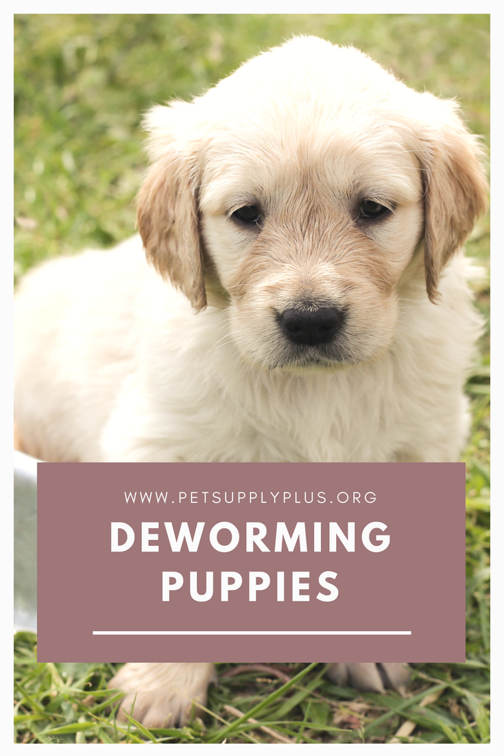 Deworming Puppies or Puppy Deworming | Pet Supply Plus