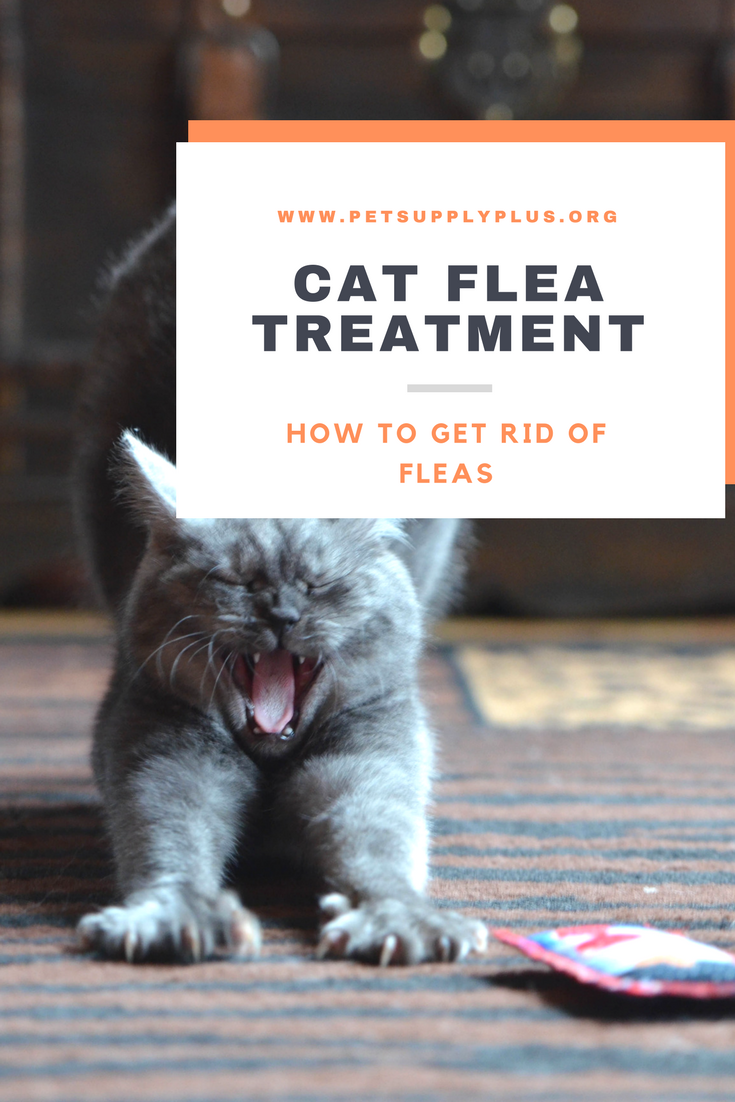 Can You Give Your Dog Too Much Flea Treatment