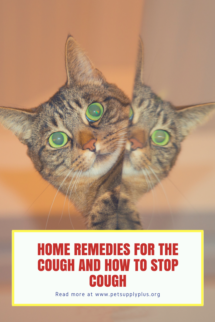 Home Remedies For Bladder Problems In Dogs